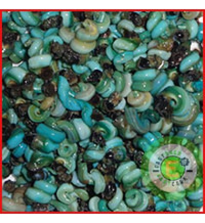 Periwinkles without  shell- Small Size